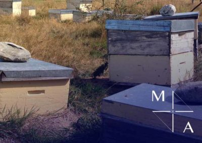 MANUKA HONEY BUSINESS INVESTMENT OPPORTUNITY NEW ZEALAND